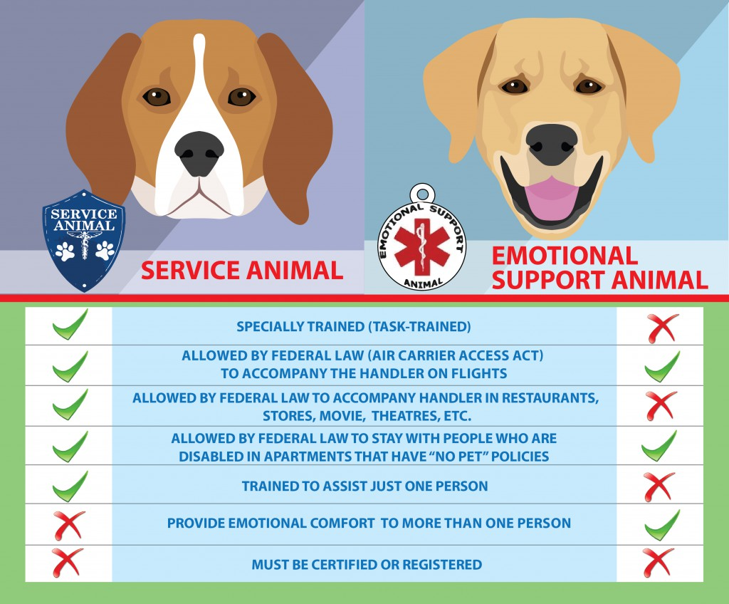 News service animal vs emotional support emotional support comfort animals and therapy dogs 1betcityfo Image collections